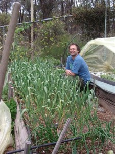 Raised Bed of Garlic