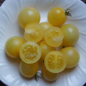 Snow White Cherry Tomato Seed