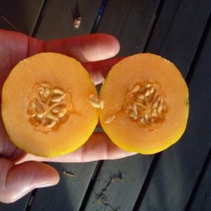 Farthest North Melon Seed
