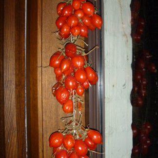 del Vesuvio Storage Tomato Seed
