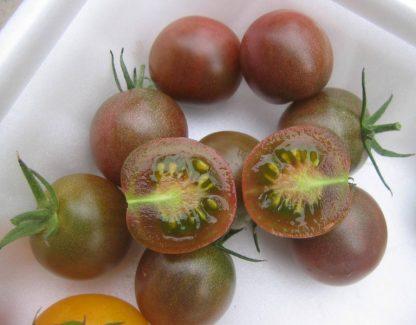 Black Cherry Tomato Seed