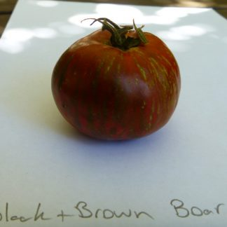 Tomato black and brown boar Tomato Seed