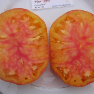 Tomato Seed - Pineapple