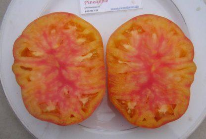 Tomato Seed - Pineapple